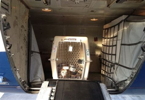 Dogs on Planes: Taking Fido Flying
