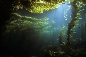 1000+ images about Landscapes > Kelp forests on Pinterest