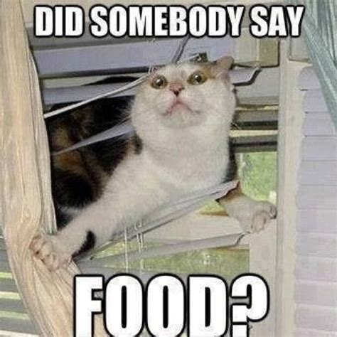 cuisine humour did somebody say food meme picture