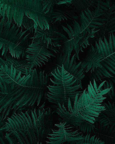 kostenloses foto zum thema blaetter botanik dunkelgruene