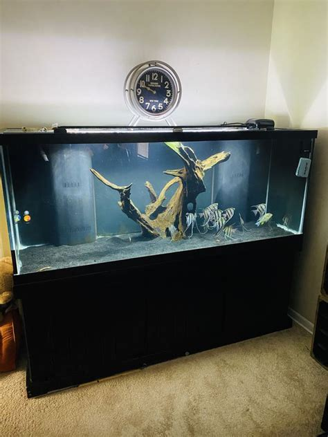 210 Gallon Fish Tank And 75 Gallon Setup For Sale In
