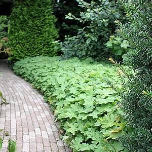 Hang Bepflanzen Bodendecker : pflanz pflegeanleitung f r bodendecker native plants ~ Lizthompson.info Haus und Dekorationen