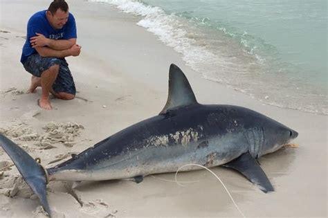 shark mako land massive upi foot