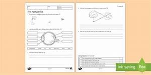 Ks3 The Human Eye Homework Activity Sheet