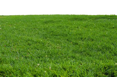 Free Grass Png Transparent Images, Download Free Clip Art