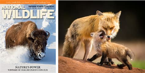 canadian wins american wildlife federation photo contest