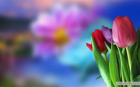 Flower Animation Wallpaper - wallpaper 224947