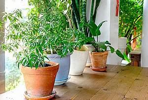 Zimmerpflanzen Für Kinderzimmer : tipps f r die pflege der zimmerpflanzen im winter ~ Orissabook.com Haus und Dekorationen