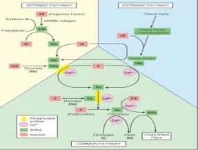 MBBS Medicine (Humanity First): Coagulation disorders. Coagulation Factors