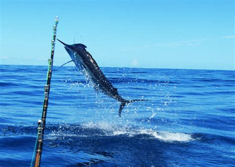 Salt Shaker Boat Tours by Guide To Fishing In The Bay Of Islands Bay Of Islands