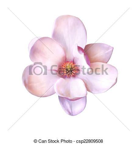 fiore clipart magnolia fiore illustrazione fiore magnolia isolato