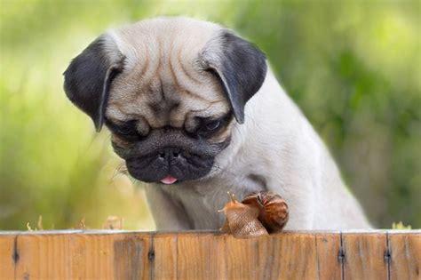 pet safe pest control cuteness