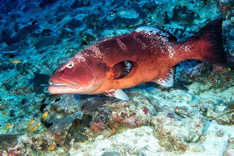 fish spanish grouper english names mero go el every spain merluza oughta traveler know dishes recipes bonita