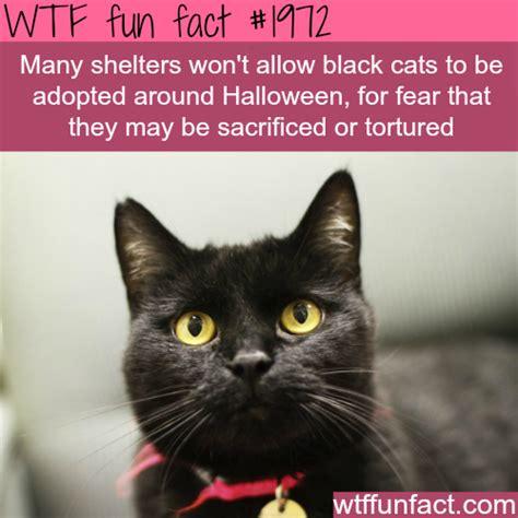 black cats  halloween wtf fun facts helpful hints