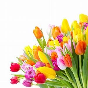 Blumen Verschicken Auf Rechnung : blumen auf rechnung str u e ohne risiko verschicken ~ Themetempest.com Abrechnung
