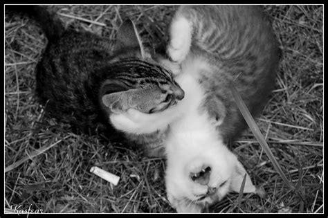 Chernobyl Cats By Kasfear On Deviantart