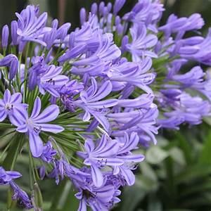 Blau Blhende Pflanzen Und Blumen Bestimmen