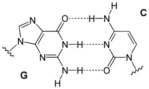 structural biochemistry nucleic acid nitrogenous bases purines guanine wikibooks open books
