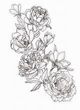 Peony Tattoo Drawing Coloring Peonies Tattoos Drawings Magnolia Tatoo Flowers Pencil Magnolias Tatouage Geometric Zeichnung Ink Pfingstrosen Elegant Sketch Template sketch template