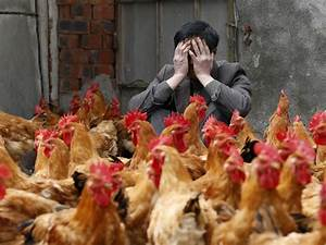 Experts Are Worried About China Bird Flu H7n9