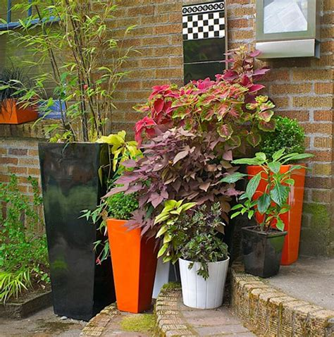 potted plants for shaded areas best plants for containers in the shade garden pics and tips