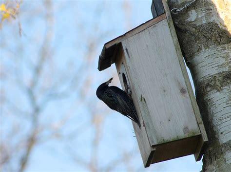 le nichoir 224 oiseau comment le construire et l installer au jardin