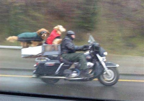 motorcycle rain happiness is a motorcycle ride in the rain with your two dogs