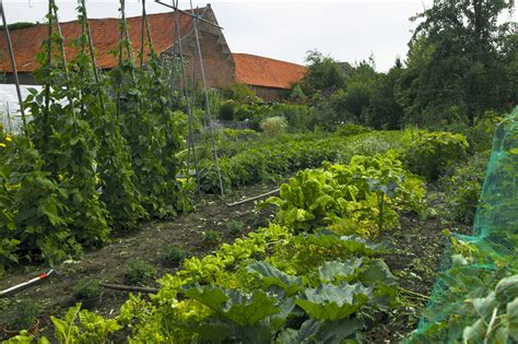vegetables  grow     support