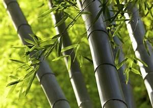 Wie Schnell Wächst Bambus : bambus asiatisches flair zu hause bambus garten ~ Frokenaadalensverden.com Haus und Dekorationen