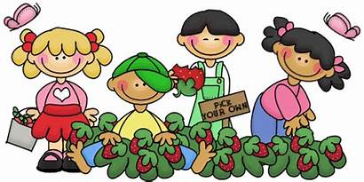 Strawberry Clipart Berry Farm Field Trip Picking