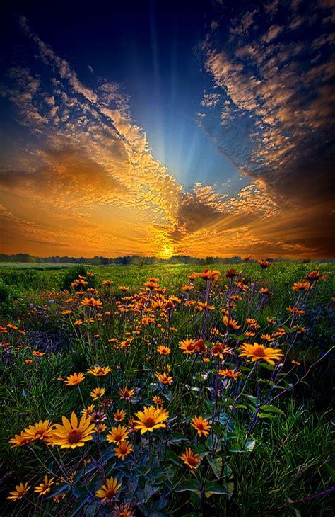 Fantastic Landscape Photograph Field Daisies