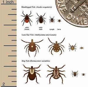 Identify  U2013 Tick Free Nh