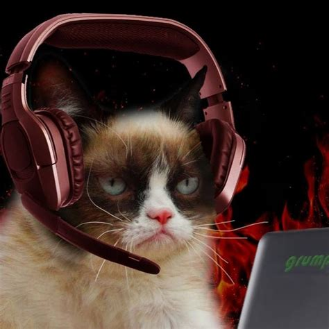 Grumpy Cat Gamer Youtube
