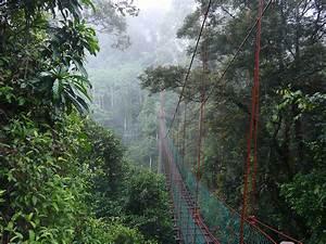 Danum Valley Conservation area | Borneo Rainforest | Sabah ...