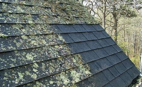 What's Eating Your Roof?