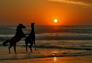 Horses In The Sunset On The Beach