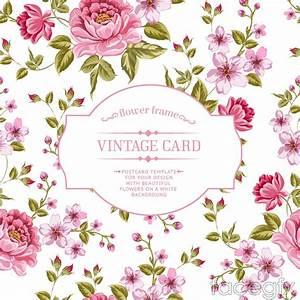 Elegant rose apricot flower background vector – Over ...