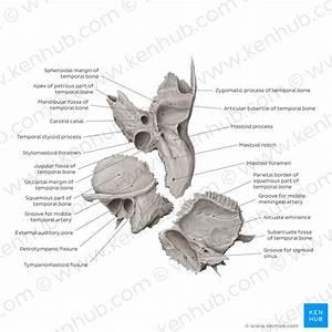 Temporal Bone  Anatomy  Parts  Sutures And Foramina