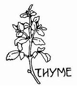Coloring Pages Herbs Herb Thyme Spices Drawing Colouring Printable Sheets Plant Garden Sage Books Getcolorings Medicinal sketch template