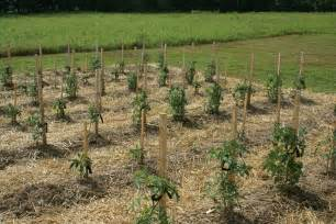 Garden Stakes for Tomato Cages