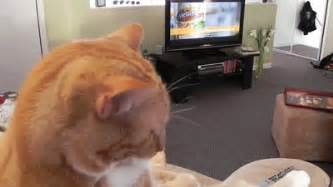 tv for cats cat sitting and tv gif