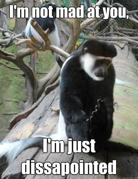 Im Mad Meme - im not mad at you im just monkey memes picsmine
