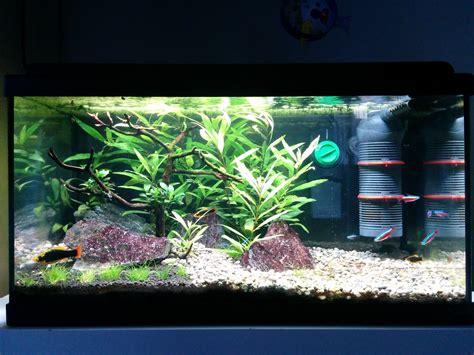 eau verte de l aquarium page 3