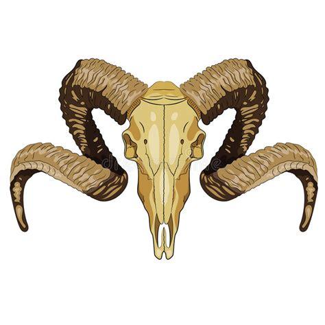 Cráneo Del Carnero Con Grandes Cuernos Del Ram Stock de