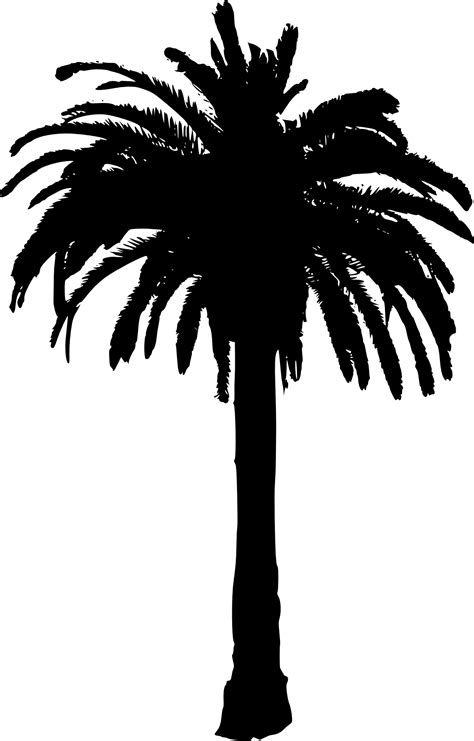 palm tree clipart black and white no background 15 palm tree silhouettes png transparent background