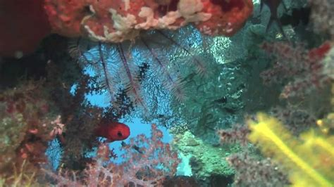 Nature Tv Timor Leste One Of Those Days Diving