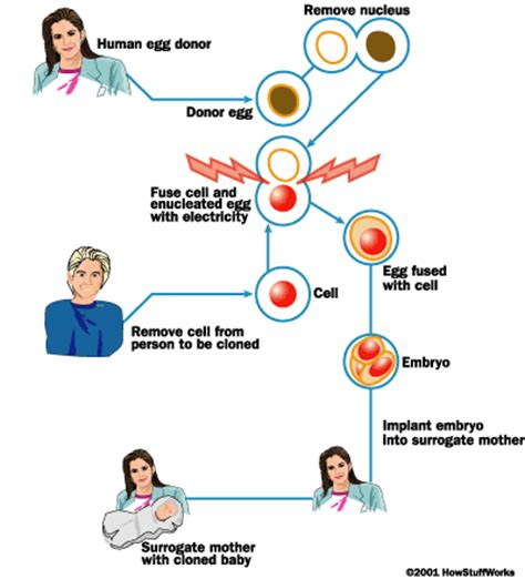 cloning scientific breakthrough or moral dilemma process