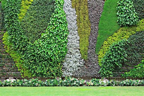 vertical garden history   plants  walls