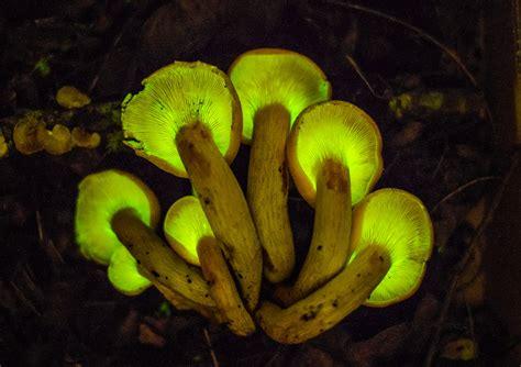 hunting mushrooms     glow   dark