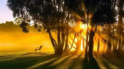 Rays Sun Morning Sunrise Trees Fog Park